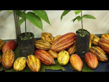 9º Festival Internacional do Chocolate e Cacau